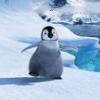 green_sosiska: пингвин