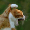 ∞: Кот!