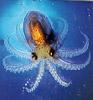 squidboy userpic