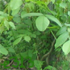 weeds, green, home