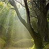 noctis_aureae userpic
