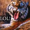 tiger lol