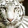 my_cuppycake userpic