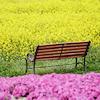 Spring - Park bench