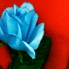 You People And Your Quaint Little Categories: Blue Rose by My Utopia