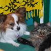 Bo & Ziggy
