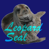Muninn's Kiss: leopardseal