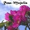 セーラーX: Rosa Majalis