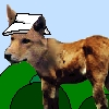 dingodonkey userpic