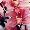 [Misc.]Orchids