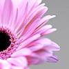 nluvwanangel: Random-Pink flower