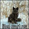 A little black fox