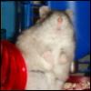 Anthy Lorrel: Totoro Hammy