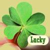 stock- clover-lucky