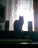 veselo_zhivem userpic