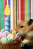 DebW: birthday hamster