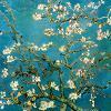 fiorelli userpic