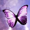 herbalbutterfly userpic