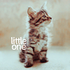 little one colour kitty