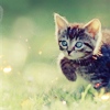 kitty in the meadow