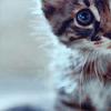 kitty peeks!