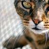 persikay: cat
