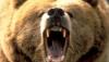 bearfairie