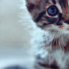 Leviathan: kitty