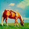 winddancer55945: Girl and palomino