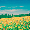 ambersaidso userpic