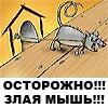 злая мышь