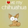Chihuahuah