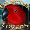 Eclectus Companions Unite to Share Advice,