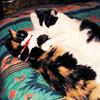 Peppersaurus: Pepper & Sheba