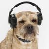 headphonezone userpic