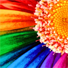 Will Sue for Porn: flower rainbow
