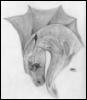 melancholydraco userpic