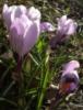 flowerysd userpic