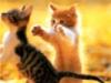 рыжий_котенок