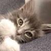 Toobeekomi, кот, pussy cat, котёнок, кошечка