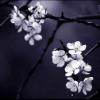 Floral: Dark Flowers
