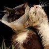 Hurt/Comfort Kitties