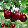 cherry_blues