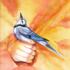 a_blue_jay userpic