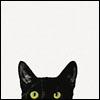 cat inquisitive