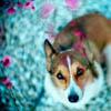 dog - bella_sol