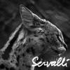servalli userpic
