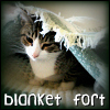 _medley_: blanket fort by rustydog