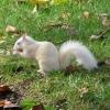 ~Dynamint~: squirrel