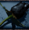 alquaj userpic